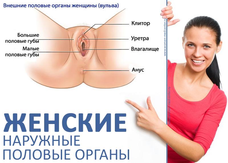 Изучают половые органы порно 47924 фотография